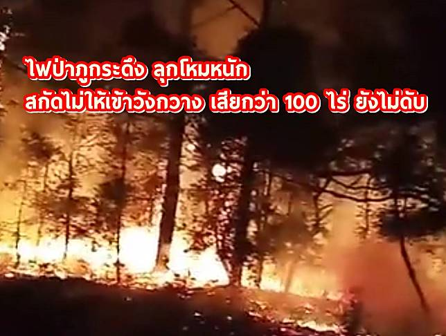 เลย ไฟป่าภูกระดึง ลุกโหมหนัก สกัดไม่ให้เข้าวังกวาง เสียกว่า 100 ไร่ ยังไม่ดับ