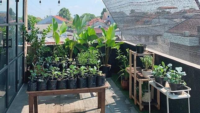 Kebun milik Ayudia Bing Slamet dan Ditto di rumahnya. (Instagram/@ayudiac)