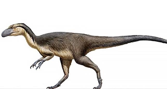 Dinosaurus Berbulu Ditemukan untuk Pertama Kalinya di Australia. Kredit: AOL
