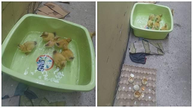 越南一名女網友日前買鴨仔蛋回家,沒想到幾天後竟然孵出黃色小鴨。(圖/翻攝自臉書)