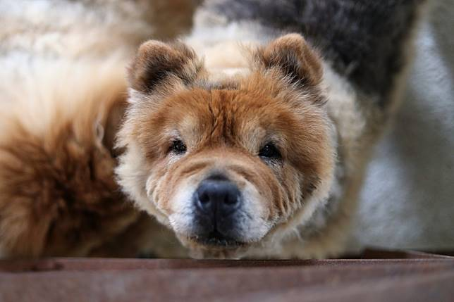 Dog medicine goes viral in South Korea over claims it cures human cancer
