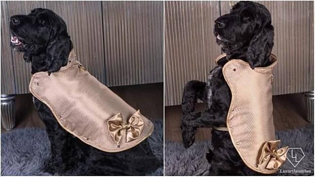 Hampir 2 Miliyar Rupiah, Apa Kelebihan Jaket Anjing Ini?