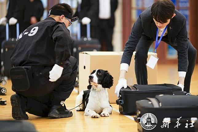 เซี่ยงไฮ้จ้าง 'สุนัขจรจัด' ตัวแรก ลุยงานดมกลิ่นในศุลกากร เผยเรียนรู้ไวเกินคาด