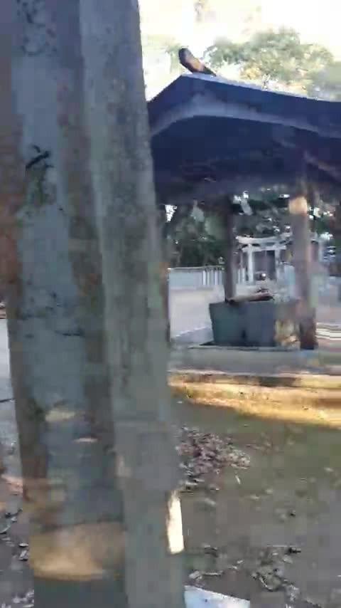 CACHE_VIDEO_MOV_0208.mp4
