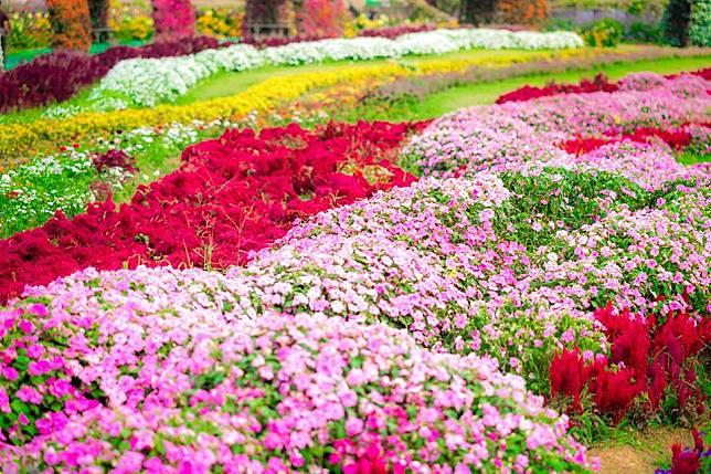 พาเที่ยว สวนภูมิพฤกษา ชมดอกไม้เมืองหนาว สัมผัสไอเย็นที่วังน้ำเขียว