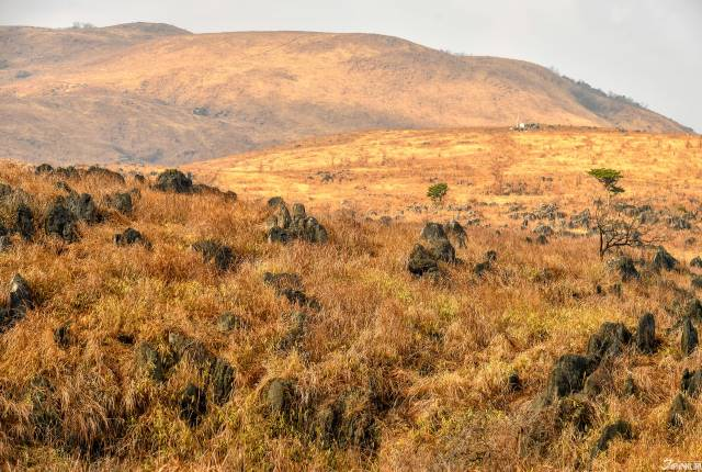 <p><b>枯草參差的石灰岩,透露出超越三億年洗練的色澤。</b></p>