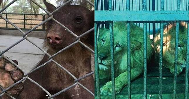10 Potret hewan sirkus sebelum dan sesudah dilepas ke habitat asli