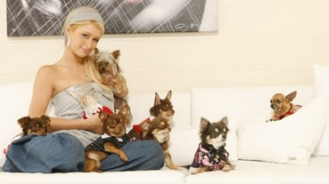 芭黎絲希爾頓愛犬走失,懸賞天價高額獎金求好心人協尋