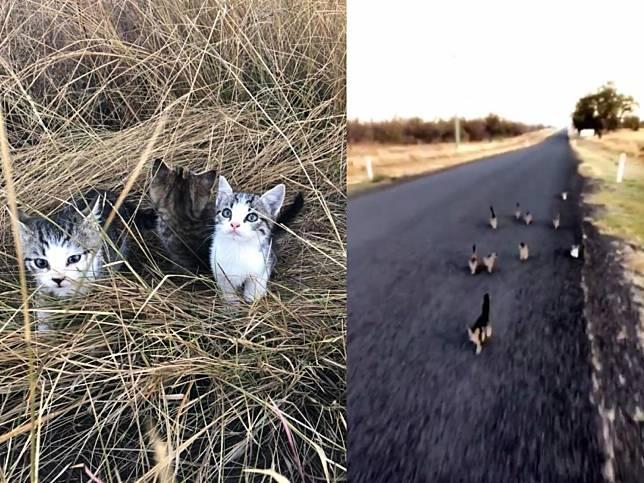 女子遛狗遇見十隻遺棄小貓 全數屁顛飛奔尾隨她回家!