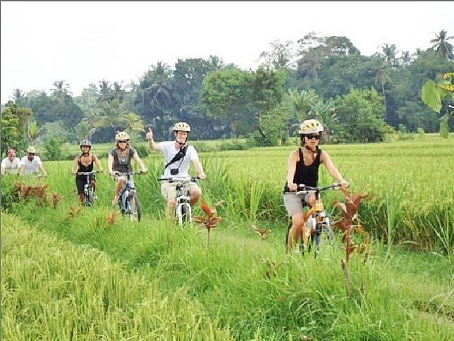 Wisatawan bisa ke kebun teh atau bersepeda menyusuri sawah. Foto: @kaliandra_sejati