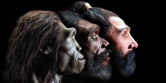 Jenis Jenis Manusia Purba Yang Ada Di Indonesia Banyak Ditemukan Di Pulau Jawa
