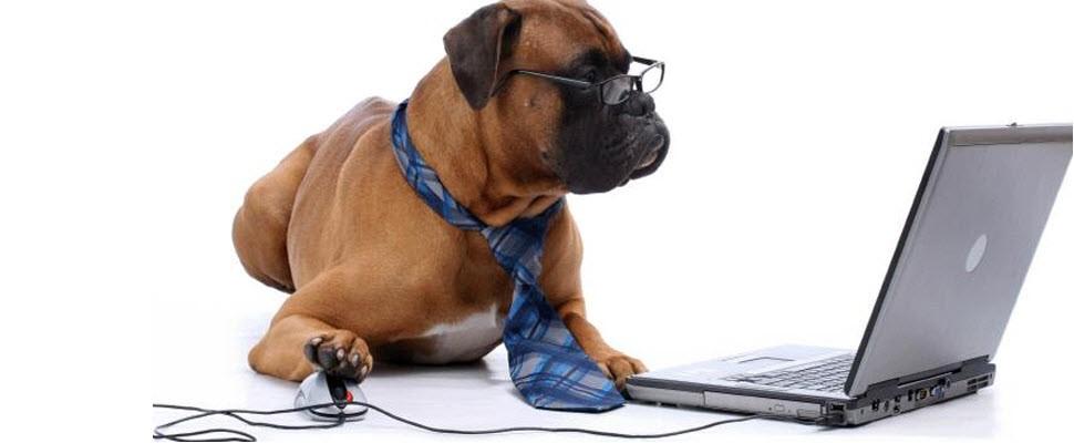 國際帶狗上班日,讓毛小孩療癒你的心~