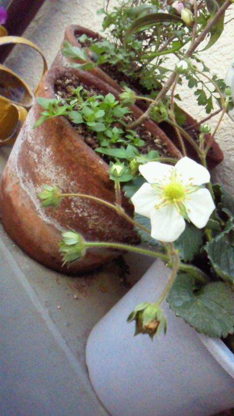 三森すずこオフィシャルブログ「MIMORI's Garden」-2011022512180001.jpg