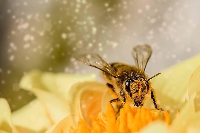 แบบทดสอบจากญี่ปุ่น ผึ้งน้อยตัวนี้กำลังพูดว่า..?