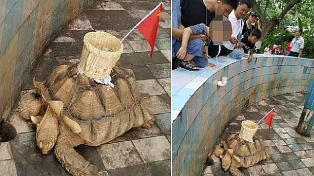 Kebun Binatang di China Menempelkan Keranjang ke Kura-kura Hidup. (Weibo/Oddity Central)