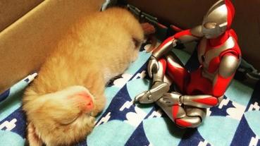 陪伴貓星人成長的超人吉田