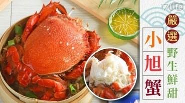 第一次挑螃蟹就上手!螃蟹怎麼挑、螃蟹吃法懶人包 不是老饕也能快速get