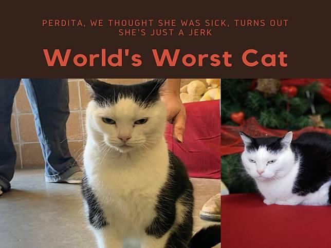 我臭臉我驕傲!收容所搞笑廣告成功為「最糟糕的貓」找家