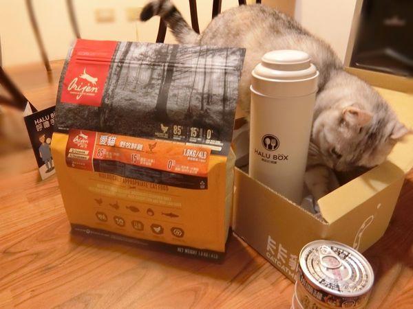 HALU BOX (11).JPG