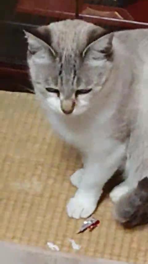 CACHE_VIDEO_MOV_0152.mp4