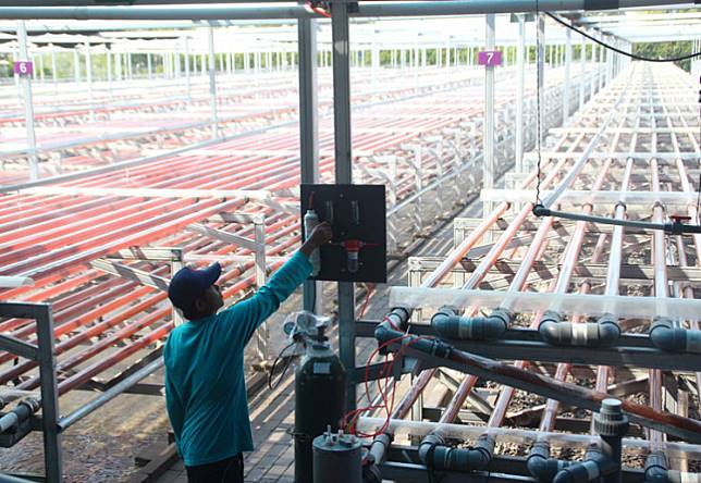 A man monitors a factory of micro-algae based biotechnology company in Kendal, Central Java.