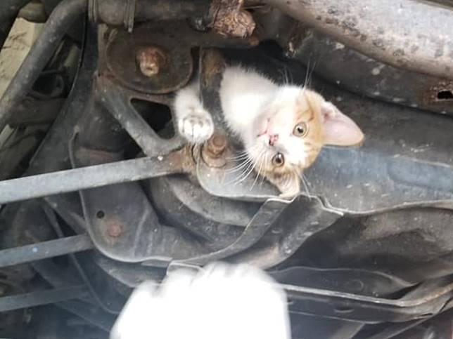 小貓卡車底跟上路30英里 意外找到新家堪稱最神奇之旅
