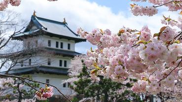 日本城池與櫻花著名景點精選!同時享受城池與櫻花絕美風景