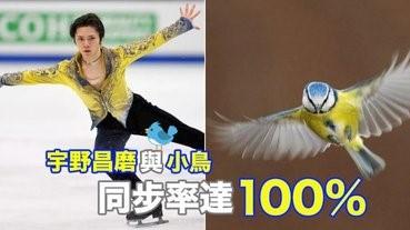 宇野昌磨與小鳥的同步率達100%