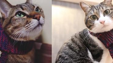 貓星人專屬圍巾!圍上它貓咪也可以化身成暖男喔~