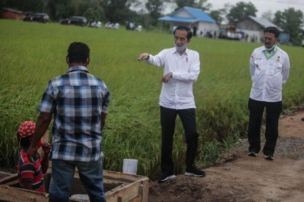 Presiden Joko Widodo dan Menteri Pertanian Syahrul Yasin Limpo meninjau food estate di Kalimantan Tengah, Kamis (9/7).