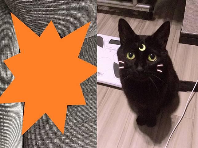 喵咪隱身術又升級!黑貓變身神奇小物 網笑:牠一定當過兵!