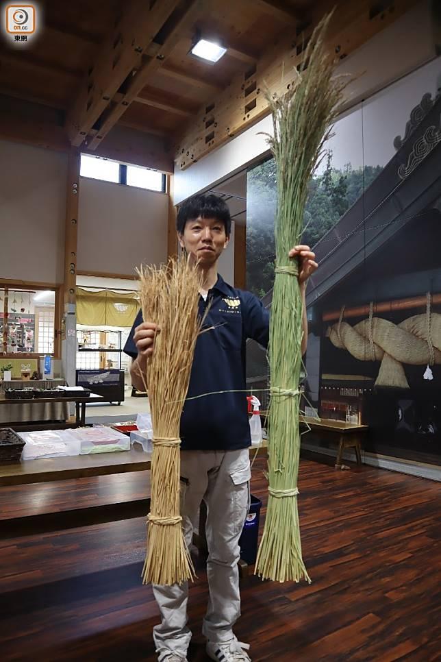 注連繩原材料為稻草,待綠草乾成啡黃後便可使用。(劉達衡攝)