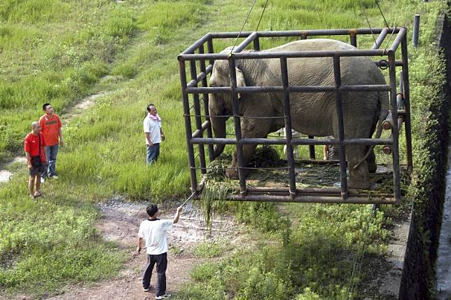 How a ban on sale of wild African elephants to zoos could affect China
