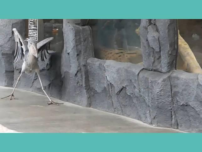 長腿大鳥霸氣走台步 下秒險滑倒以華麗姿勢扳回顏面!