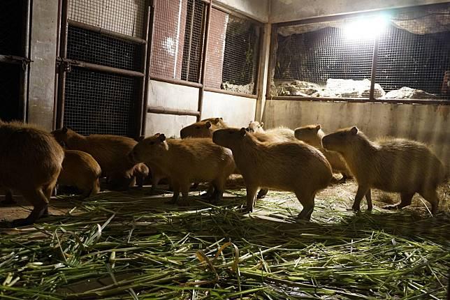 สัตว์ก็หนาวเป็น  สวนสัตว์เชียงใหม่ใส่ใจความอบอุ่นสัตว์ช่วงหนาวนี้