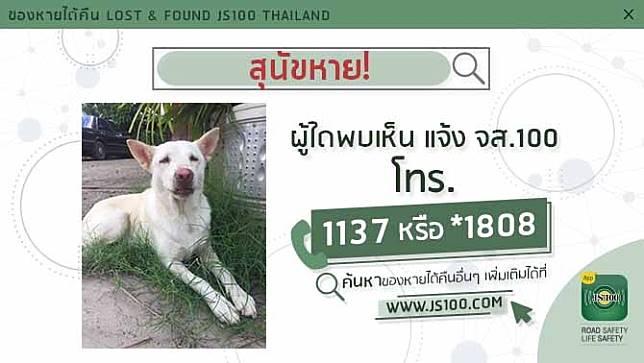สุนัขหายจากซ.สุขี ถ.รังสิตปทุมธานี อ.เมือง ปทุมธานี ผู้ใดพบเห็นแจ้ง JS100 โทร. *1808 หรือ 1137