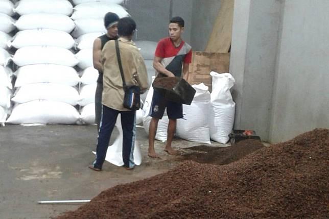Harga cengkih di Ambon terus bergerak turun