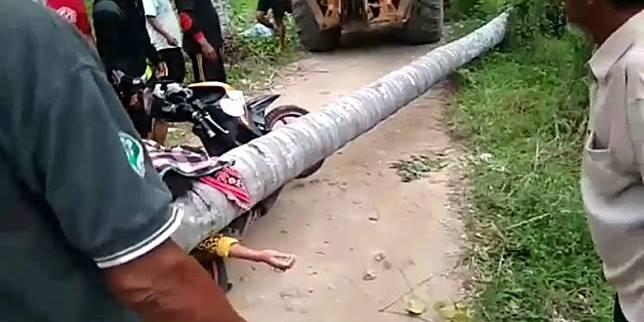 Seorang Wanita Tewas Tertimpa Pohon Kelapa Tertindih Selama 2 Jam