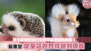 這些是竟然都是假的!?從童話世界穿越到現實,羊毛氈動物適合家裡不能養寵物的你!