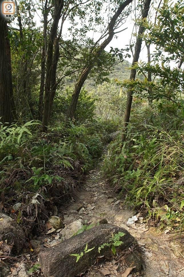 有人指蛇石坳附近有超自然力量製造一個不受外界干擾的空間,即所謂「結界」。(互聯網)