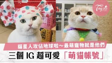 看到主子還不快跪下~盤點台灣3個 IG 療癒系貓星人,萌到你不要不要的!