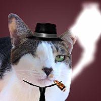 保護猫カフェ&猫ホテル ねこんチ