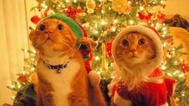 正在享受聖誕氣氛的喵星人 可是比人類來的投入呢!