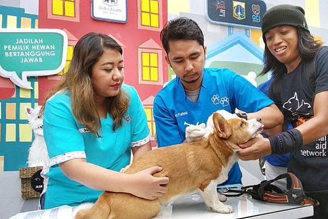 Pemprov DKI Jakarta Rilis KTP Khusus Anjing