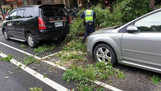 颱風遠離 龜山樹木仍倒塌