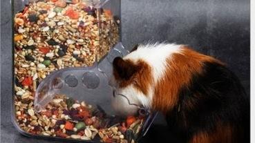 黃金鼠飼養新手必看!黃金鼠壽命、飼養重點、好物推薦一次看