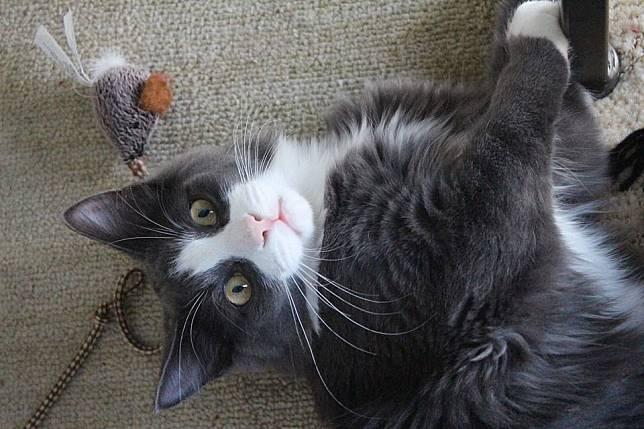 Penyebab seseorang alergi kucing bukanlah bulunya, lo