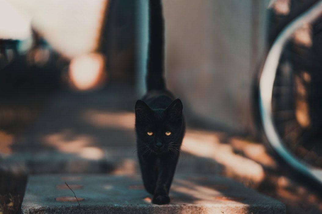 5 Mitos Kucing Hitam Di Berbagai Negara Ada Yang Menganggapnya Sebagai Pembawa Keberuntungan Bobo Id Line Today