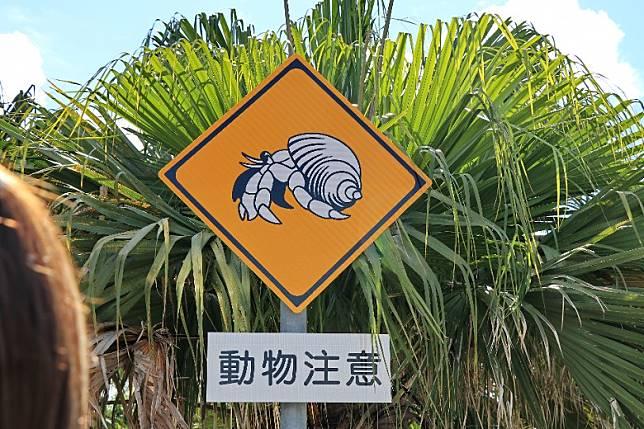 宮古島的一端橋底設置了寄居蟹隧道,路面也有小心寄居蟹路過的告示。(李家俊攝)