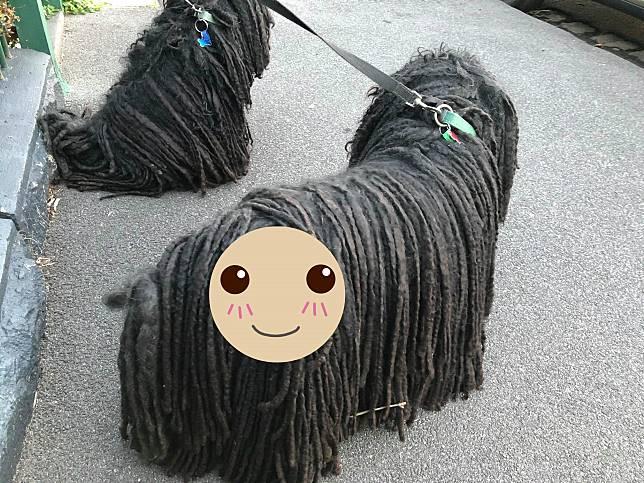 ▲波利犬出門散步,卻連續 2 天帶回「新朋友」。(圖/翻攝自 Sally Watkinson 臉書)